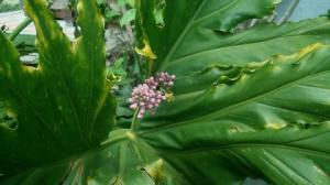 First Lilac blossom. (Stuck in a philodendron.)