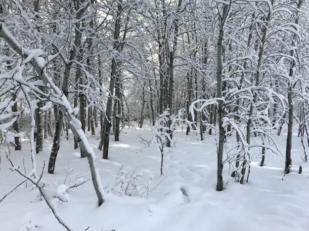 Winter hike 1