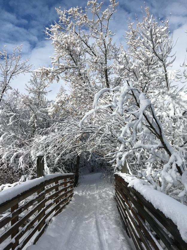 Winter hike 5