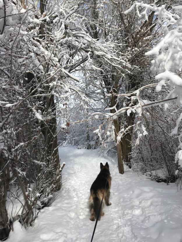 Winter hike 6